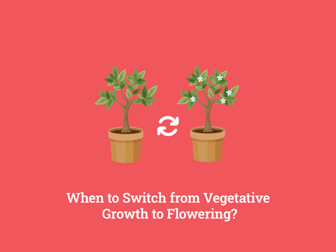 When to switch from veg to flower?