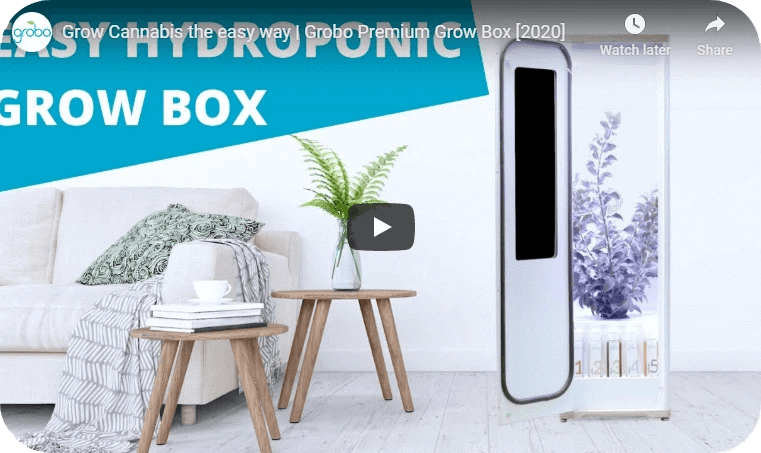 Grobo Premium Automated Grow Box in Living Room