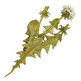 Dandelion Brooch Large Pin by Michael Michaud Nature Silver Seasons 5670 - ILoveThatGift