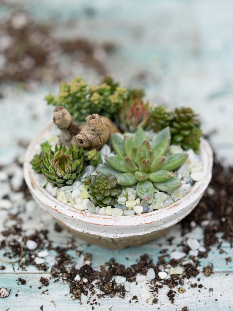 How to Create a Small, Low Dish Succulent Arrangement