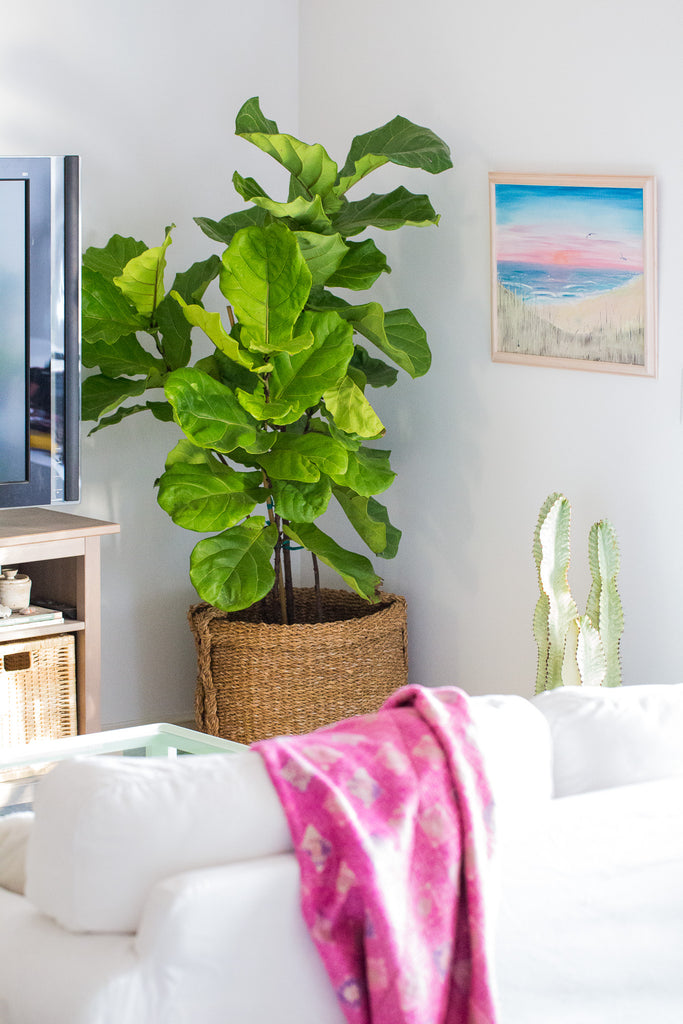 Our top 6 picks for modern low maintenance indoor plants for Modern indoor plants