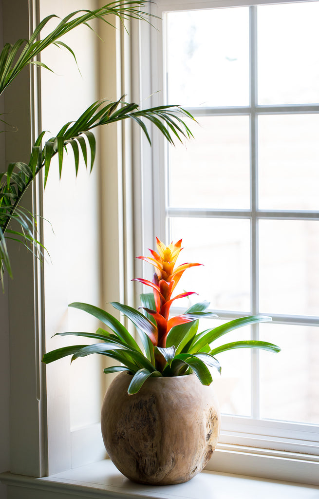 Our Top 6 Picks for Modern, Low Maintenance Indoor Plants – Dalla Vita