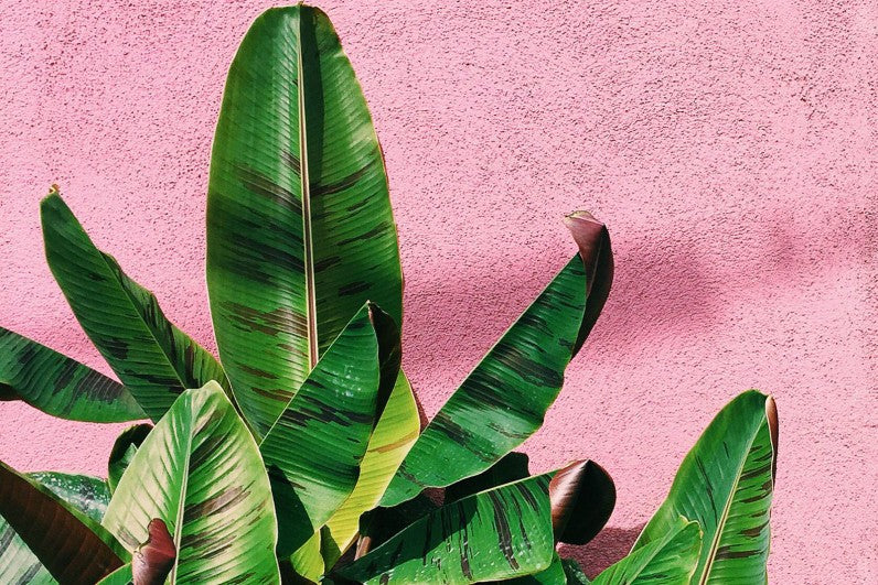 Tropical Plants on Pink