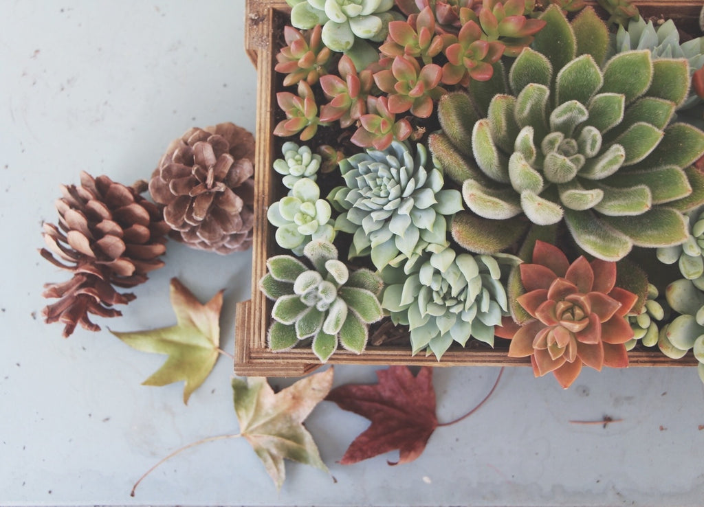 Needles and Leaves Succulents