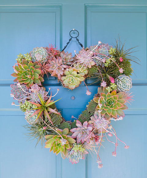 Succulent Heart Wreath - Dalla Vita