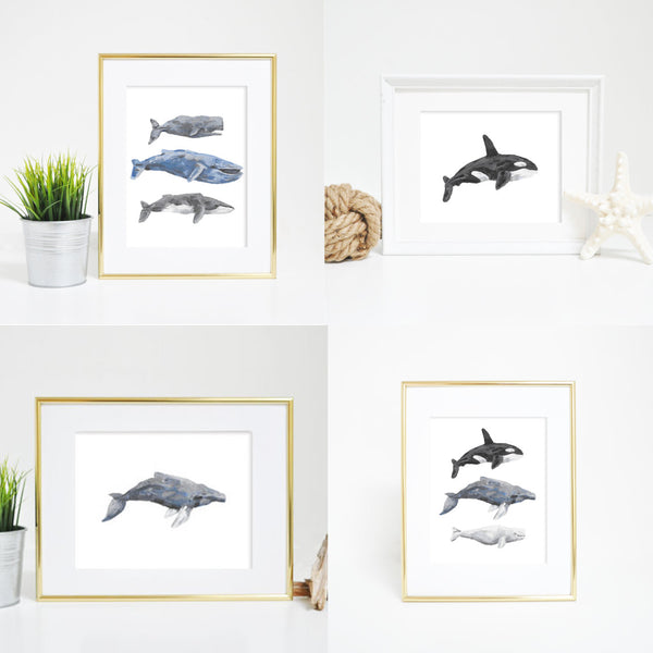 whale art print watercolors