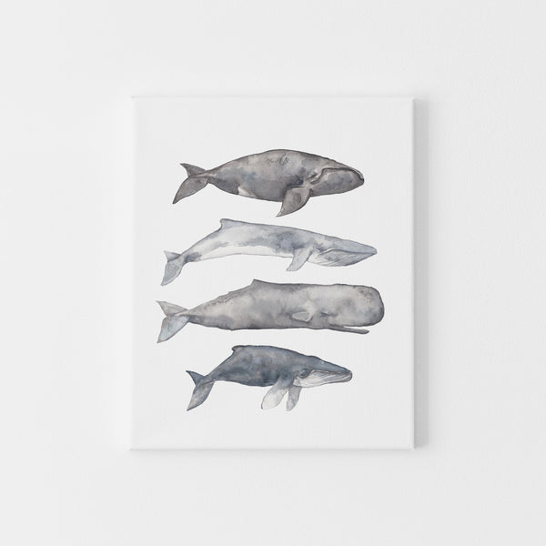 Sperm, Fin, Humpback and Right Whale Watercolor Wall Art Print or Canvas - Jetty Home