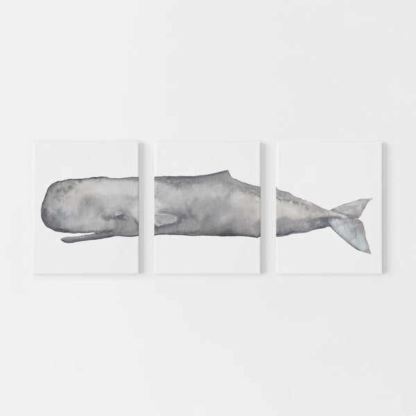 Sperm Whale Watercolor Triptych Set of Three Wall Art Prints or Canvas - Jetty Home