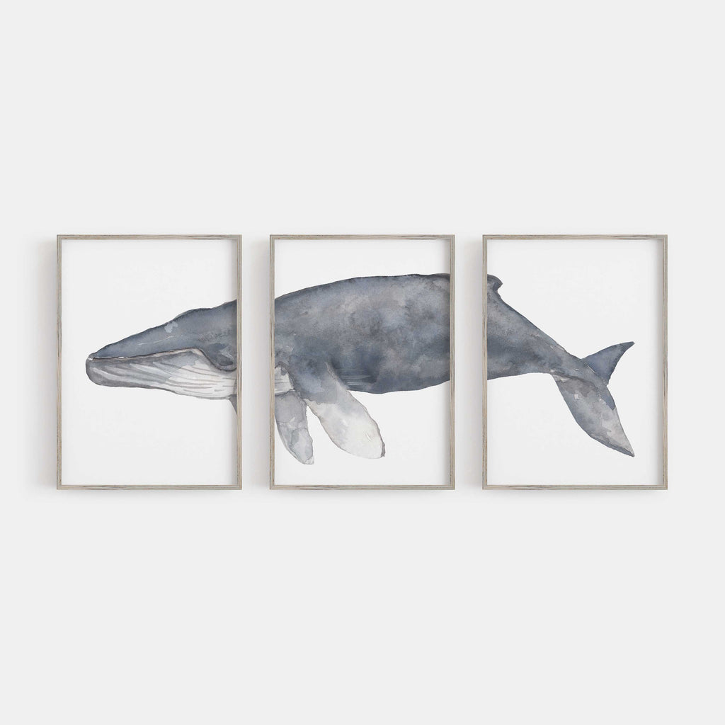 Humpback Whale Triptych Set of Three Wall Art Prints or Canvas - Jetty Home