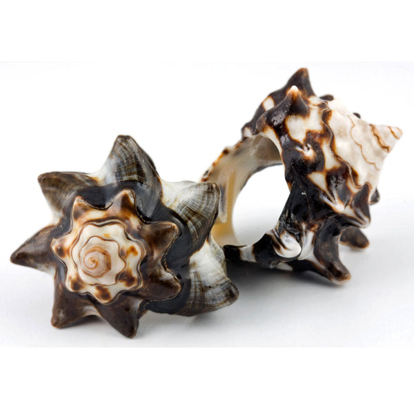 Conch Shell Ring - Original Conch