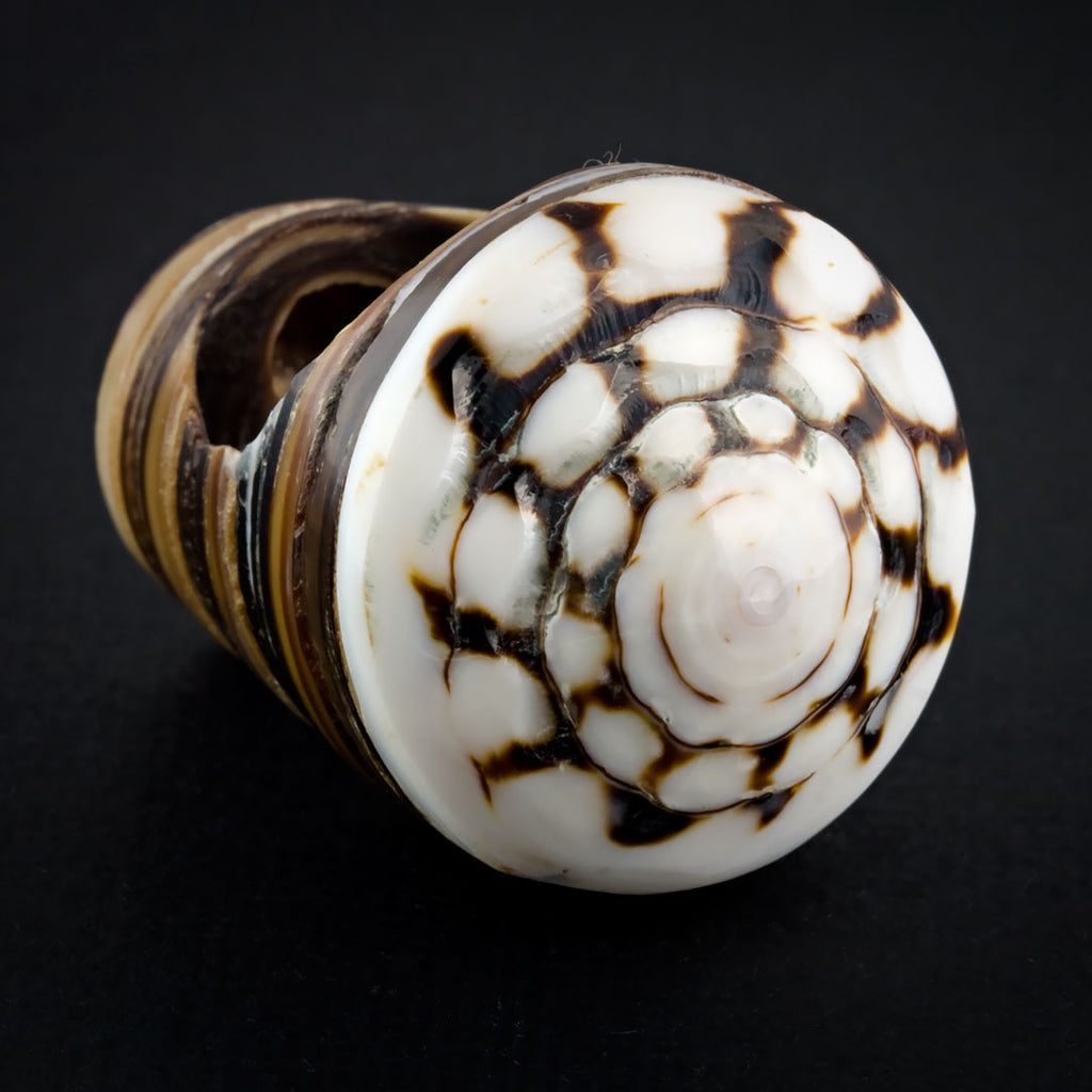 Sand Seashell Ring - Labyrinth Spiral
