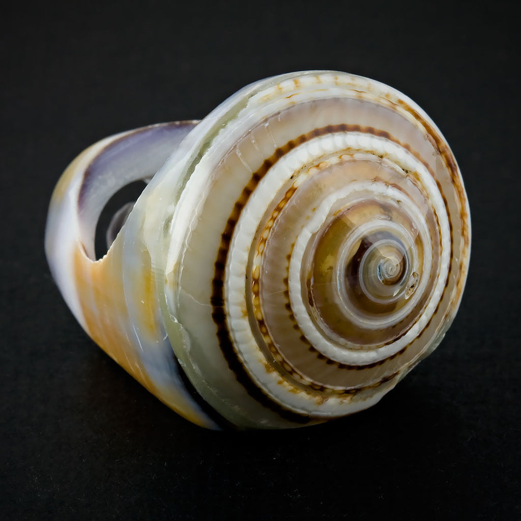 Seashell Ring - Purple Sand Spiral