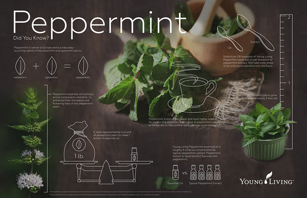 Peppermint Oil by Young Living