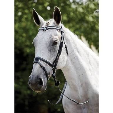 KIN Hanoverian plaited BL C