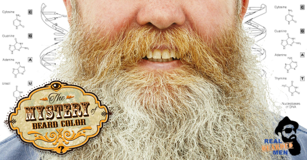 The Mystery of Beard Color Unveiled: What determines our beard color? What influences its change over time?