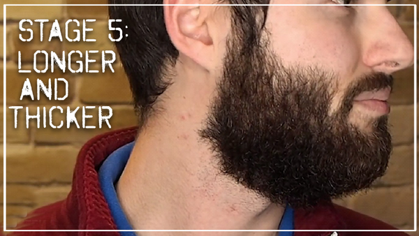 Stage 5- Longer and thicker beard