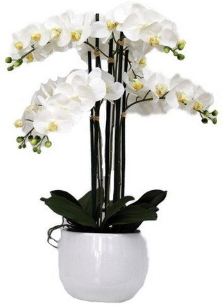 POTTED ORCHID IN WHITE POT