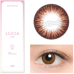 Lucia 1-Day Almond Brown colored contacts circle lenses - EyeCandy's