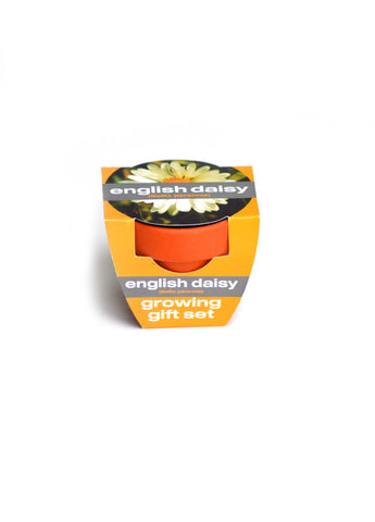 Growing Gift Set English Daisy
