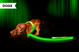 Illumiseen LED Collar + Leash Wins DogLab Testing