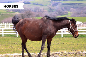 Do I Have a Pregnant Horse? Here's What You Should Know About Pregnancy in Horses