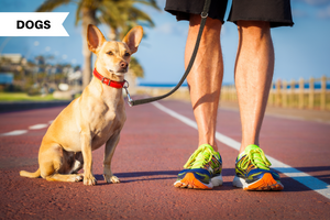 The 10 Best Dogs for Runners: Top Running Dogs to Adopt and Breeds to Avoid