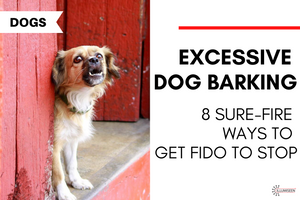 Excessive Dog Barking: 8 Sure-Fire Ways to Get Fido to Stop