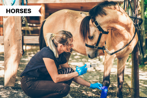 Minor Horse Wounds: How Do You Treat Them?