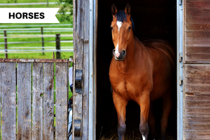 How to Keep Your Horse Stalls Clean and Spotless