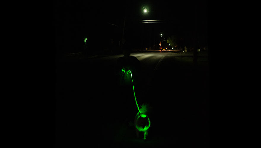 led-dog-collar-and-leash-after-dark
