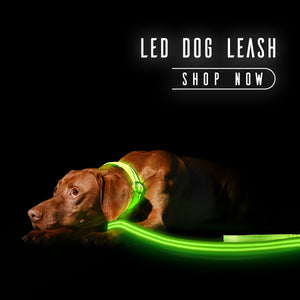 led-dog-leash