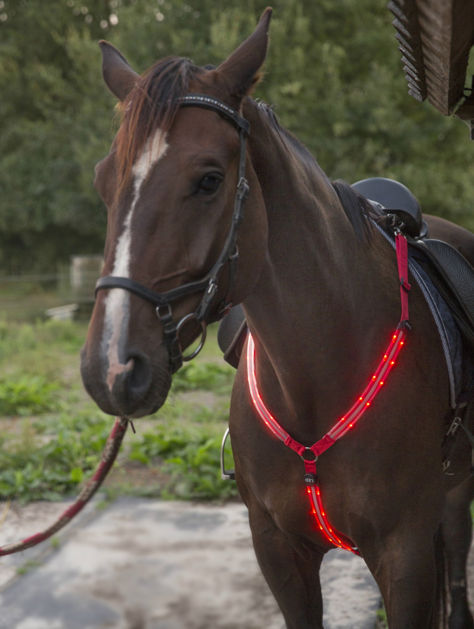 Led Horse Tack Illumiseen