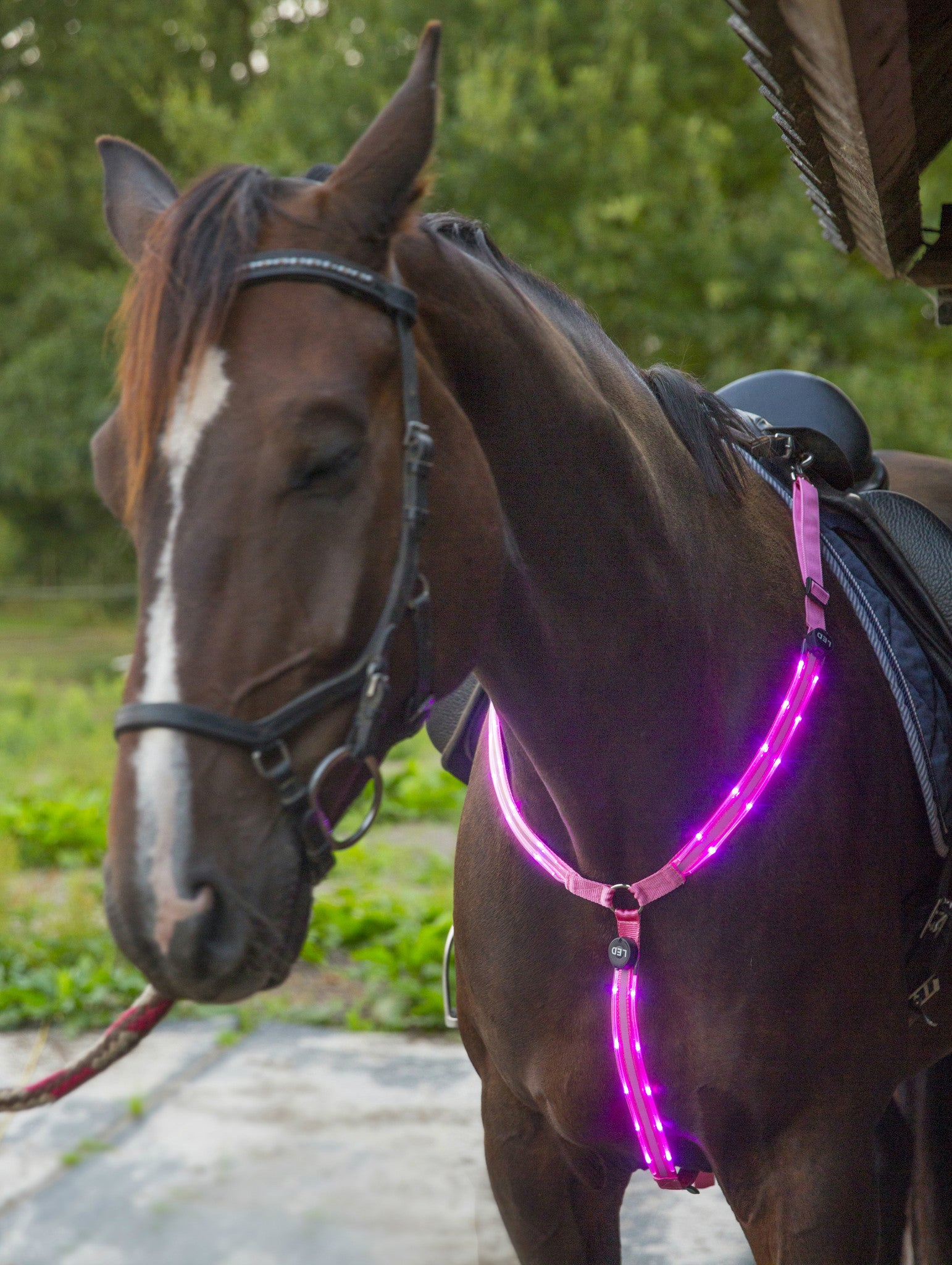LED Horse Breastplate Collar Light Halter Safety Bridle Band Collars Reflector