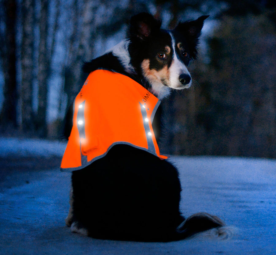 Reflective LED Dog Safety Vest