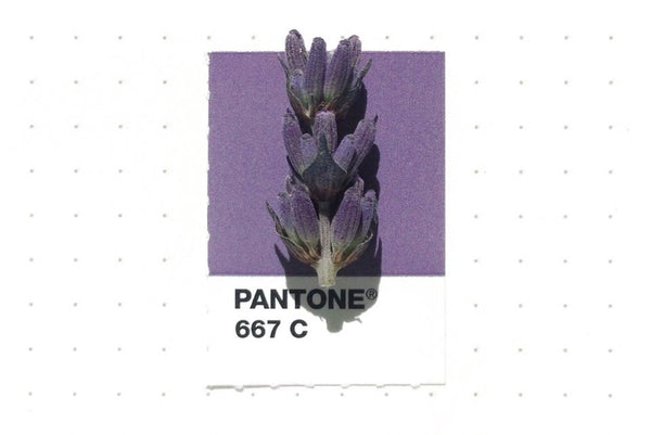 Inka Matthew Matches Everyday Objects To Pantone Colours