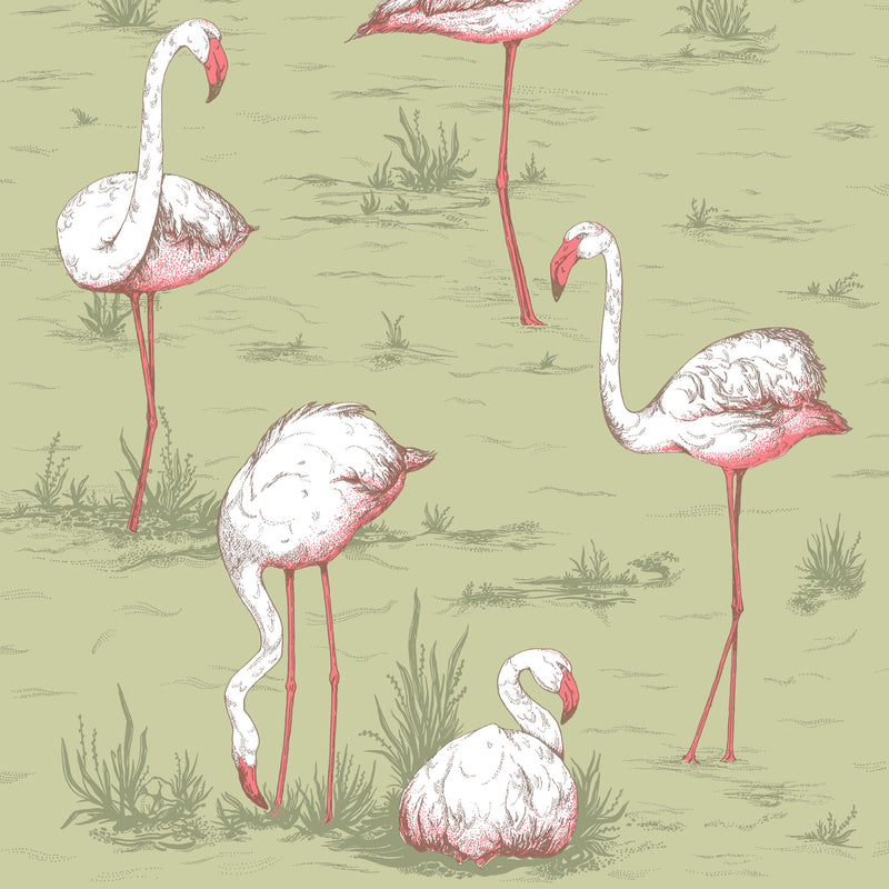 Cole and Son 'Flamingos' Wallpaper 112/11038