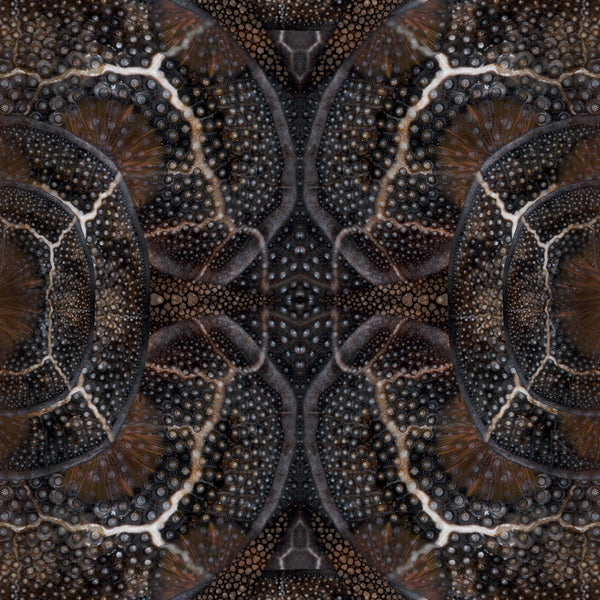 Moooi Carpets Extinct Animals / Blooming Seadragon Rug Detail