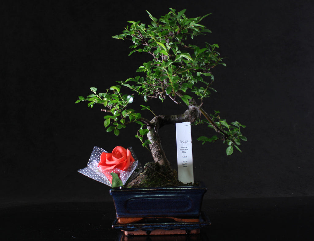 Special mothers day gift - Bonsai tree with Red Rose and personalised tag