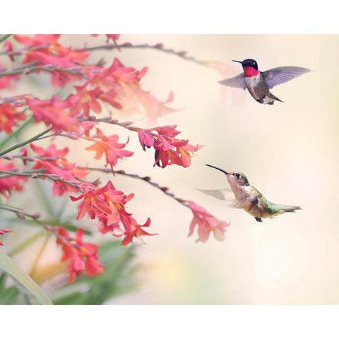 Humming Birds Wall Mural