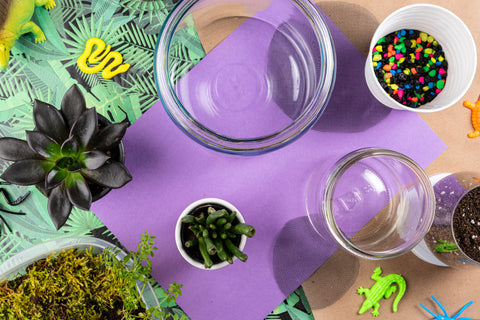 Overhead shot of terrarium materials showing two glass jars, rainbow gravel, soil, moss, and plants on a purple and leaf patterned paper background