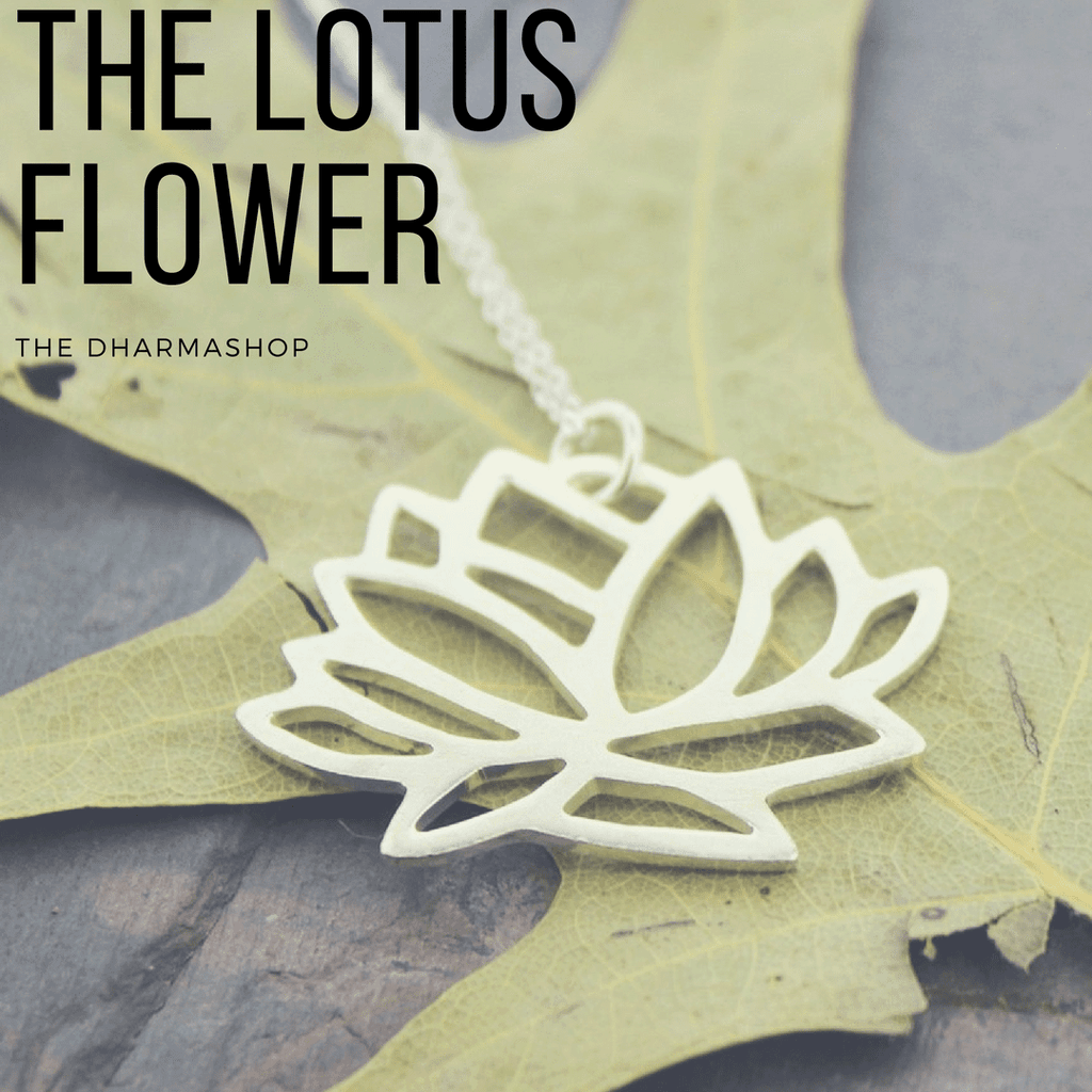 The Lotus Flower