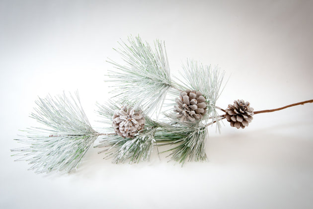 Branch with Frosted Pine Needles