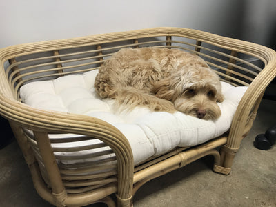 Natural Fiber Woven Dog Bed with Cushion