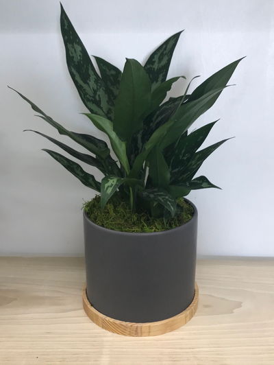 "7"" Towers Planter"