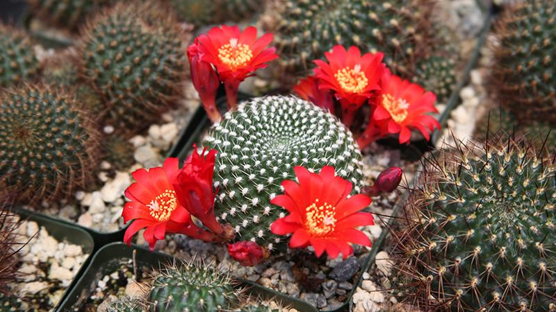 10 Reasons Why You Need More Cacti in Your Life