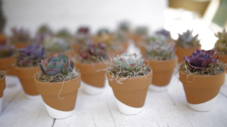 Dipped Terra Cotta Succulent Favors
