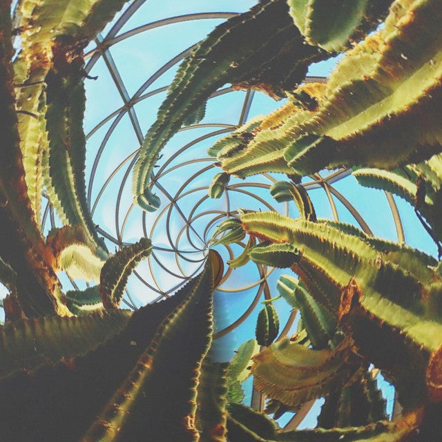 cactus view spiral