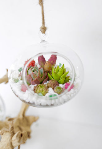succulent terrarium finished