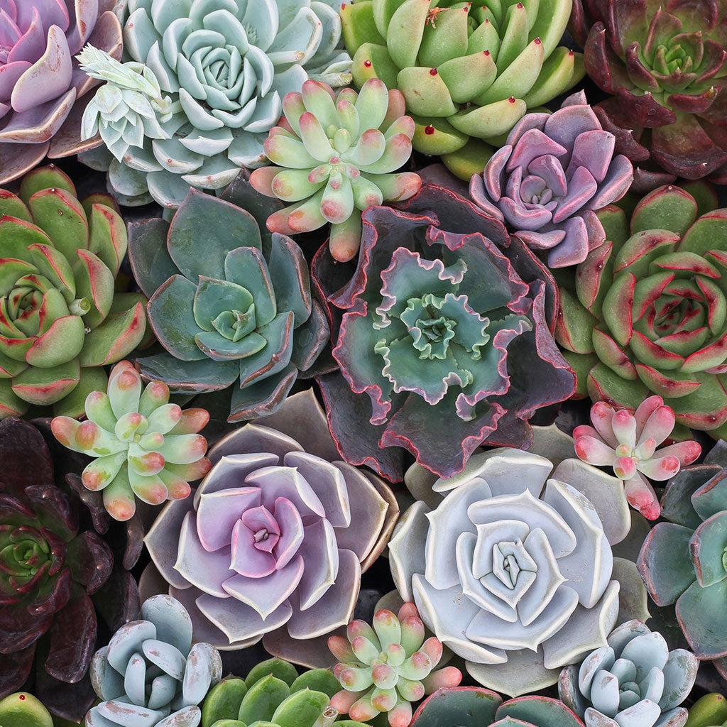 The Difference Between Succulents And Cacti Leaf Clay