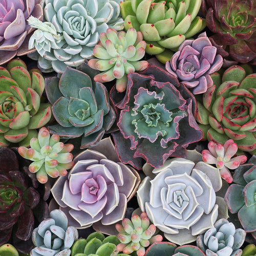 Leaf & Clay®: Premium Succulents